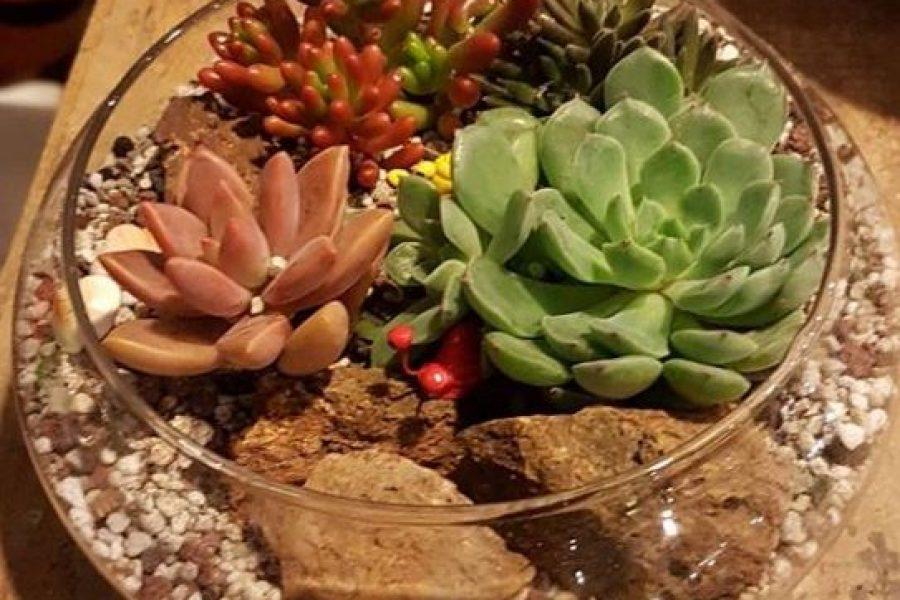 Cactus or Succulents?